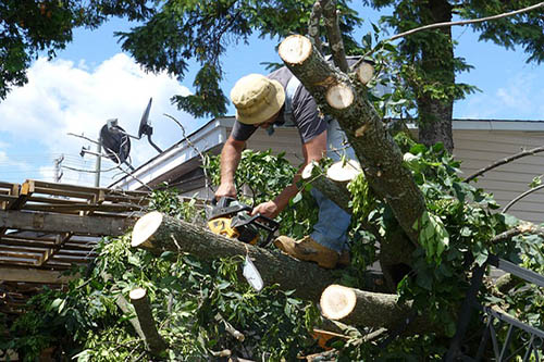 Tree-Services-Keller-TX-chainsaw-guy
