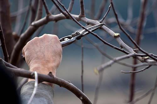 Tree-Services-Keller-TX-cutting