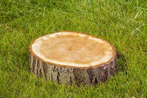 Tree-Services-Keller-Tx-stump-grinding