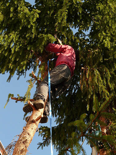 Tree-Services-Keller-TX-professional-works
