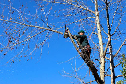 Tree-Services-Keller-TX-tree-trimming_1