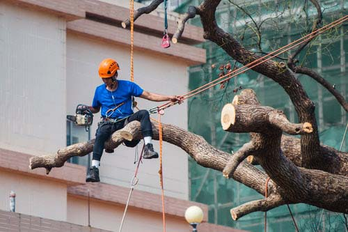 Tree-Services-Keller-TX-services-tree-removal